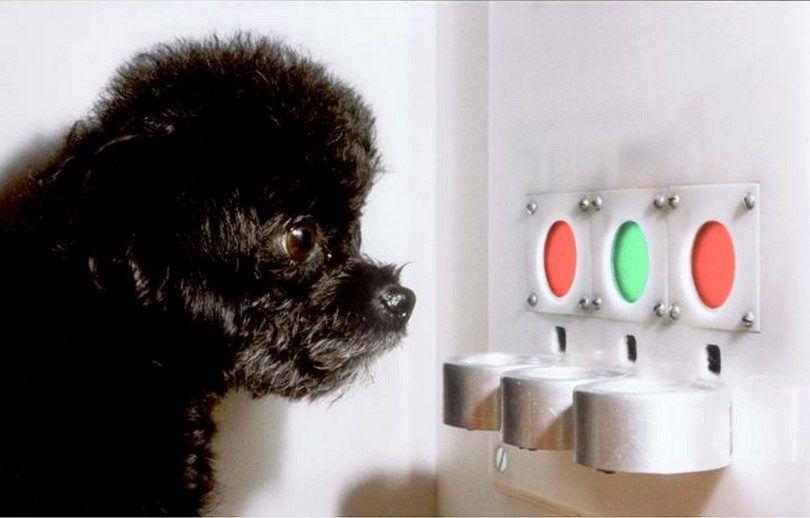 Prueba de la visión del perro