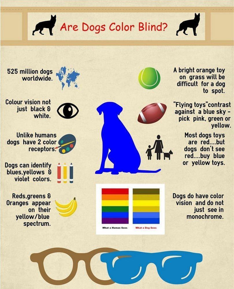 Los perros y los colores blindess