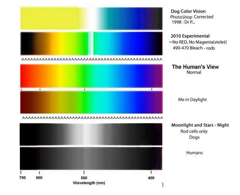 la visión del color del perro y la vista humana