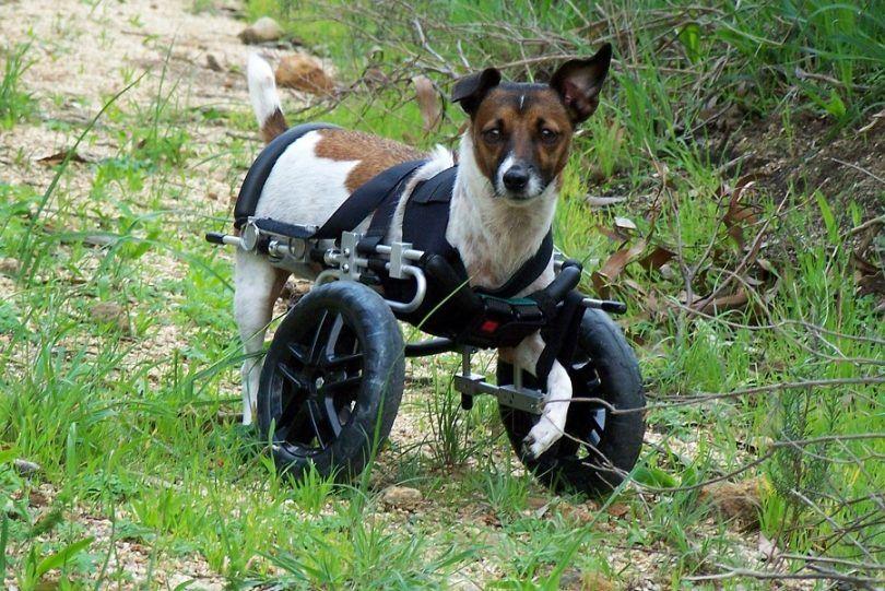La artritis en los perros: causas, signos y diagnóstico