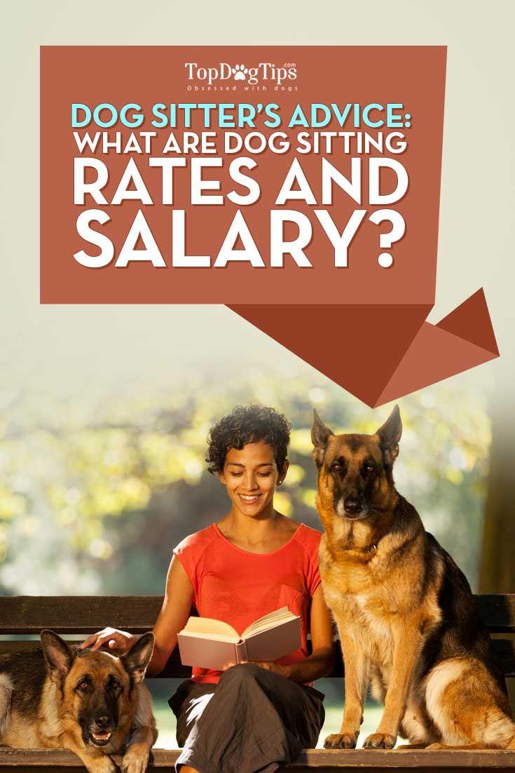 ¿Cuáles son los precios para perros y Sentado perro canguro del Salario