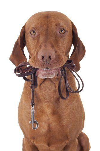 Perro Walker Salario & amp; El perro que recorre tarifas