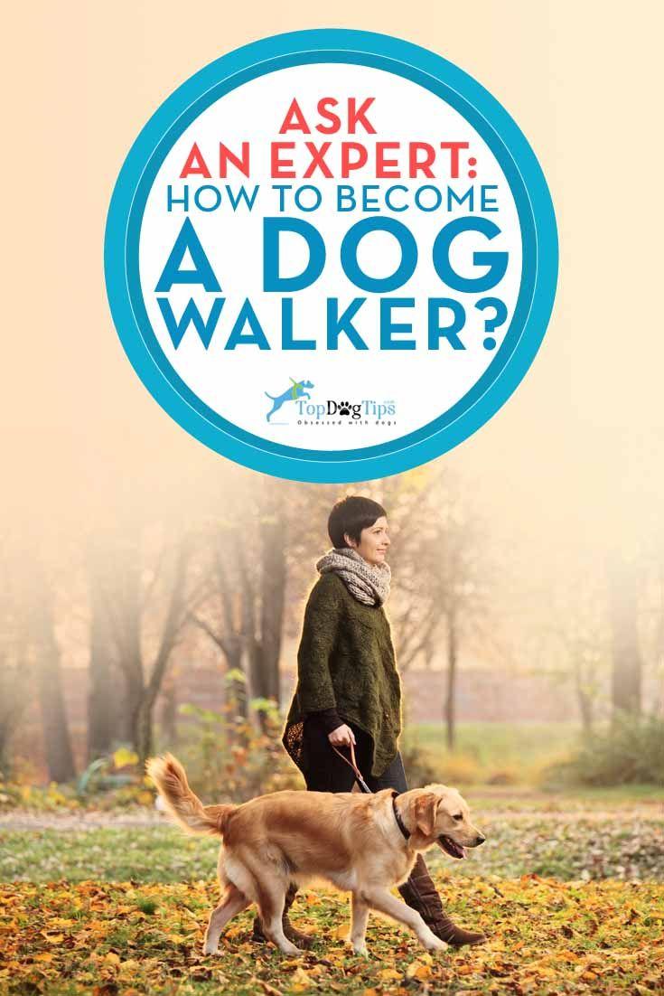 CГіmo convertirse en un perro Hoy Walker