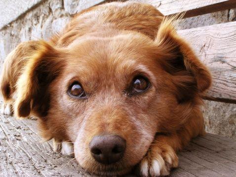 Pregunta al entrenador: la construcción de la confianza en un perro temeroso