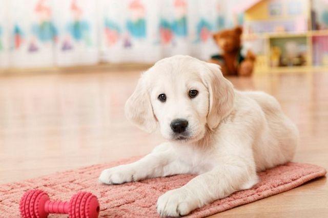 Pregunta al entrenador: lista de comprobación de socialización del perro
