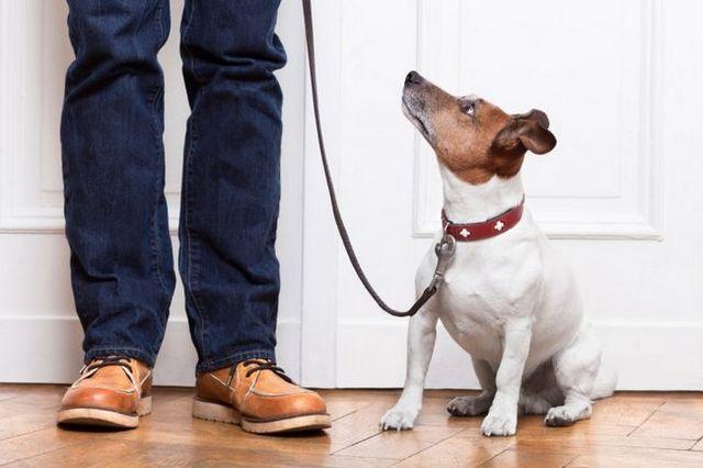 Pregunta al entrenador: la formación hoja de trucos de perro