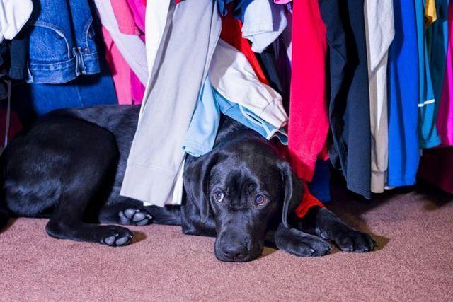 Cómo ayudar a su perro a superar el miedo a las tormentas, fuegos artificiales, y otros ruidos fuertes