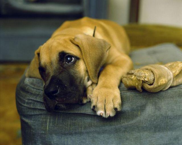 Pregunta al entrenador: ayudar a un perro del refugio adaptarse a la vida con una nueva familia