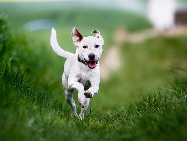 Pregunta al entrenador: ¿cómo le enseño a mi perro para venir cuando se le llama?