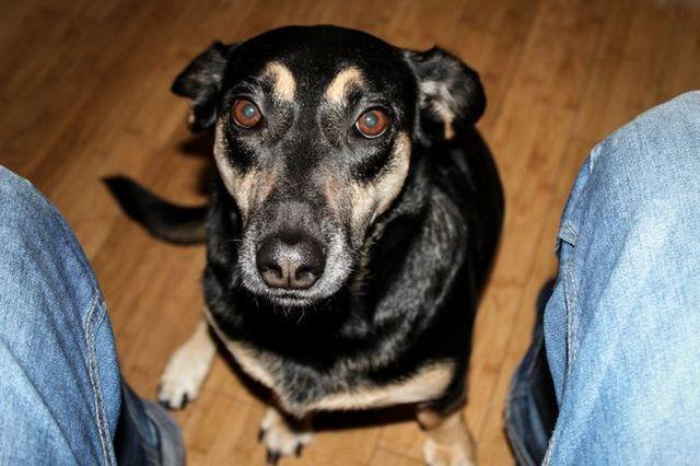Pregunta al entrenador: cómo dejar que su perro que pide el alimento