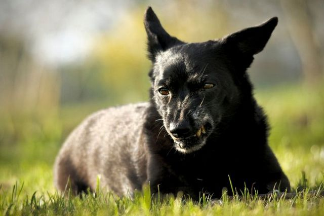 Pregunta al entrenador: mi perro se vuelve agresivo cuando intento tomar algo lejos de él