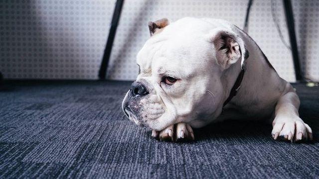Pregunta al entrenador: mi perro simplemente no me escucha