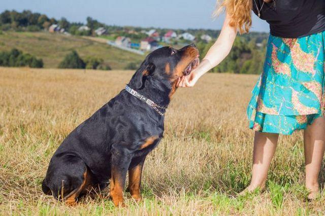 Pregunta al entrenador: la superación de los estereotipos de su perro