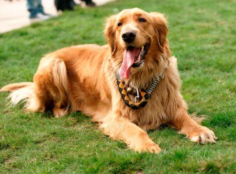 Pregunta al entrenador: enseñar al perro a permanecer en el patio