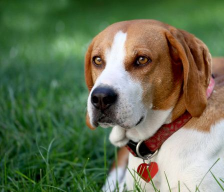 Pregunta al entrenador: enseñar al perro a dejar de comer caca