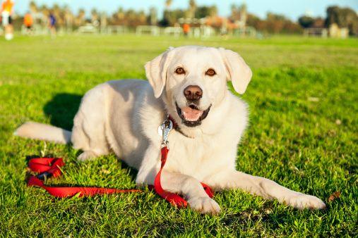 Pregunta al entrenador: enseñar a su perro a permanecer