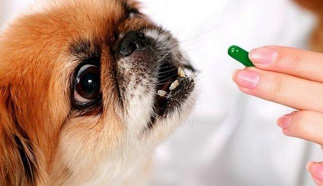 La aspirina para perros: ¿es una buena idea?