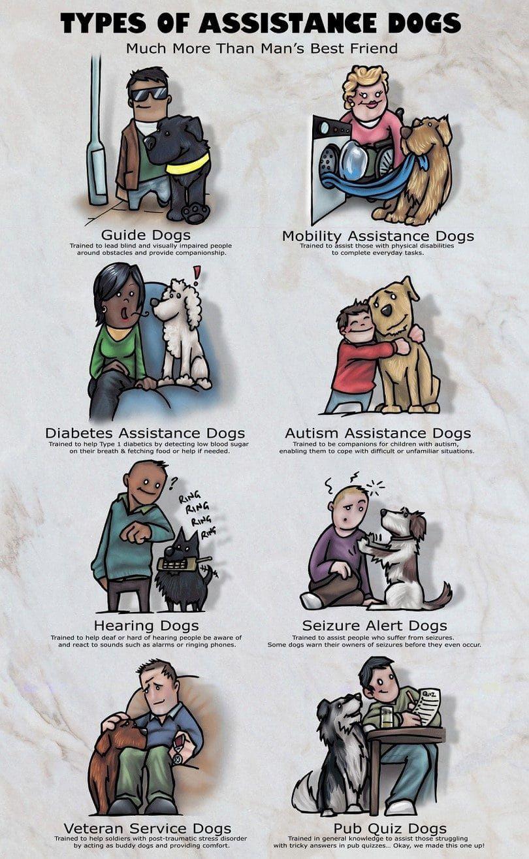 Los perros de asistencia infografía