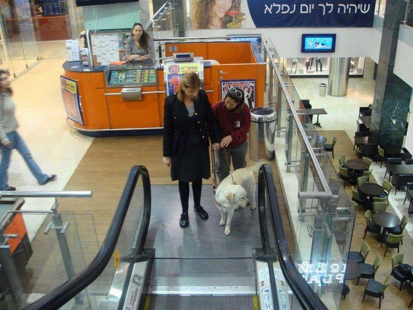 perro de asistencia ir con la mujer en las escaleras mecánicas