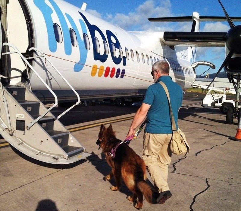 perro de asistencia de entrar en una cabina del aeroplano