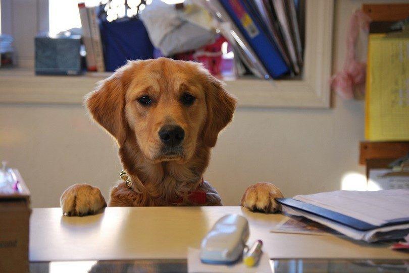 perro entrenado