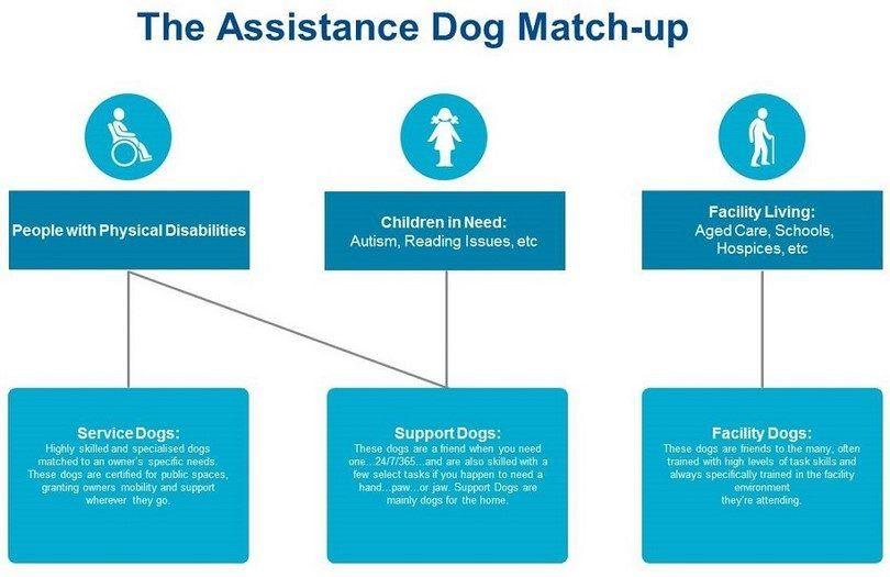 perro de asistencia coinciden