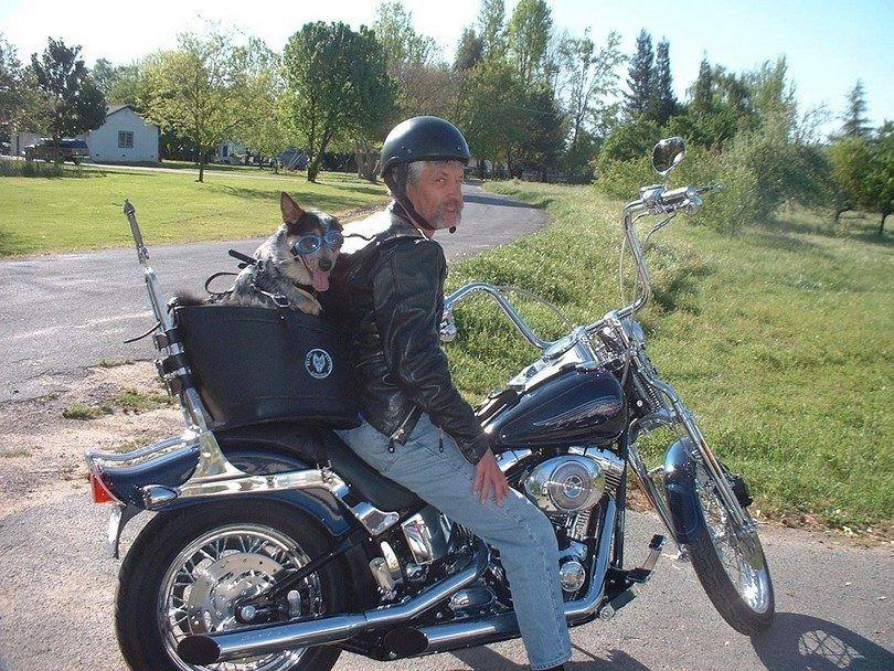 portador del perro de la motocicleta