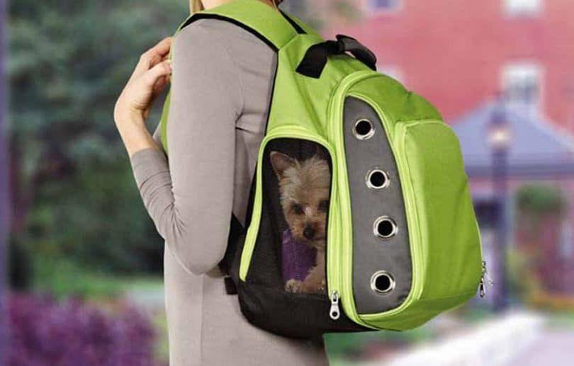 portador de la mochila canina Гєltimo ocasional