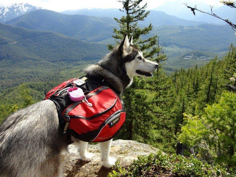 Obtener todas las cosas para su perro
