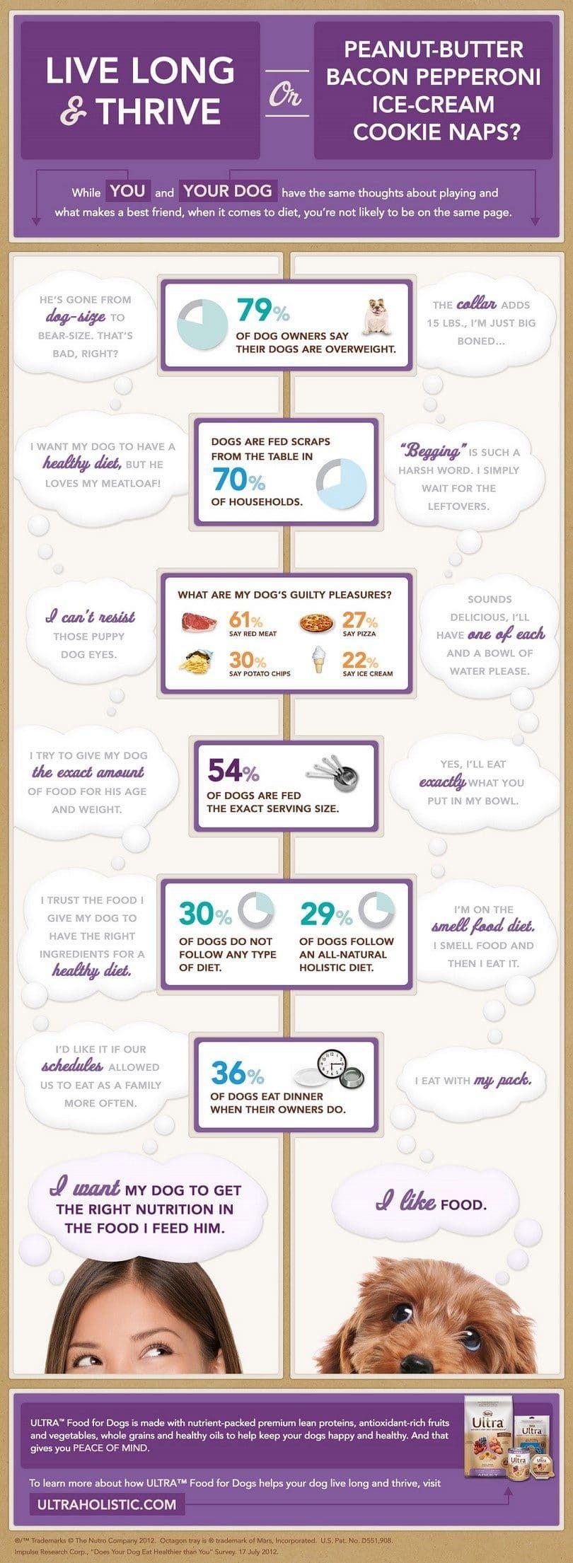 Infografía Nutrición perro