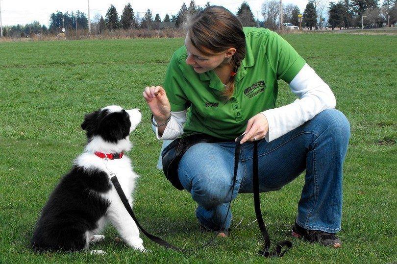 Comandos básicos del perro: campo de entrenamiento canino