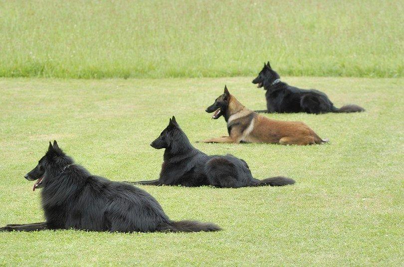 el campo de entrenamiento del perro