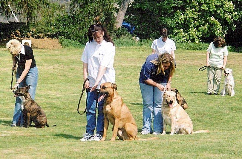 Grupo de entrenamiento del perro