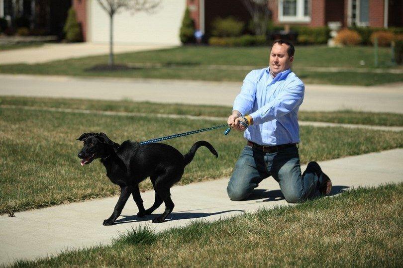obediencia del perro