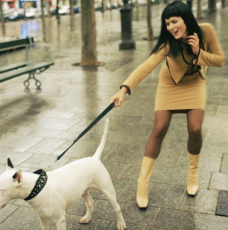 Entrenar a su perro
