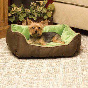 Fundamentos de acostarse - ¿Por qué su perro necesita una cama del perro