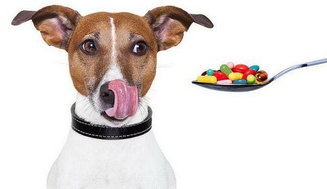 Benadryl para perros: una buena idea?