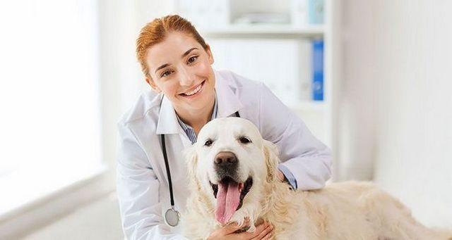 Mejor edad para castrar o esterilización de un perro