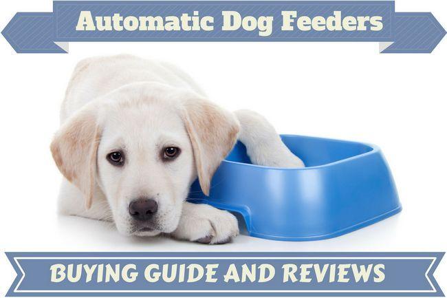 El mejor perro automática opiniones alimentadoras - alimentar a sus mascotas sin problemas