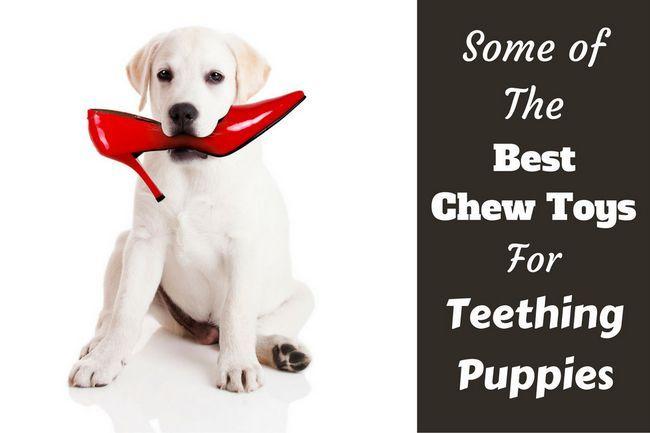 Los mejores juguetes para masticar para cachorros durante la dentición
