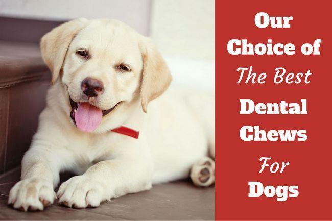 Mejores huesos dentales para perros - rodeo, opinión y consejos de compra