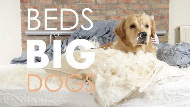 Las mejores camas del perro para los perros grandes: recomendaciones de guía y
