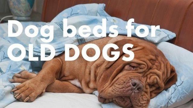 Las mejores camas para perros de edad avanzada: cómo mantener su compañera cómoda