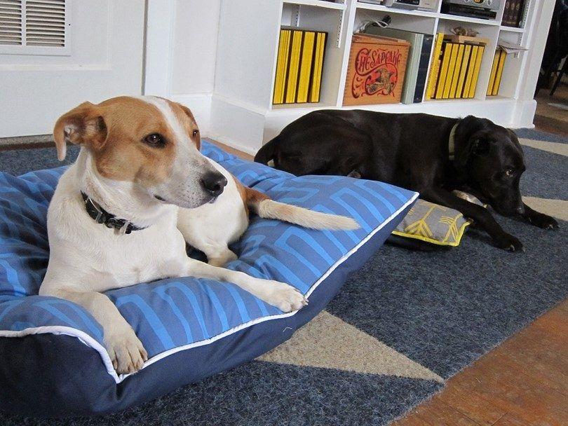 Busque el tamaño de la cama del perro dos veces