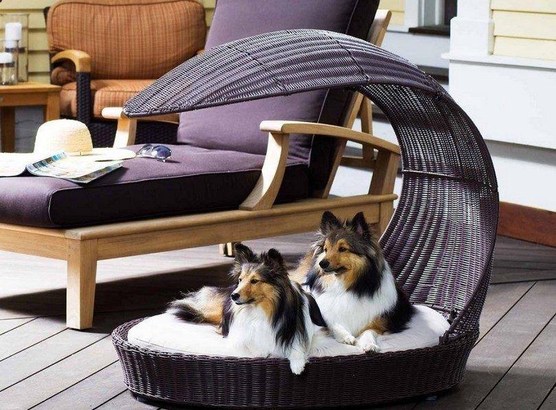 cama del perro al aire libre