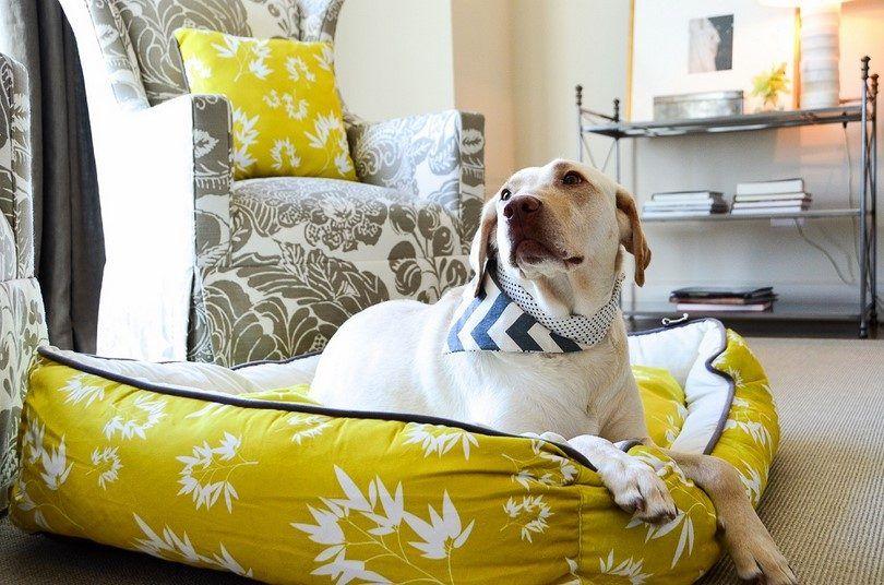 Importancia de la cama del perro