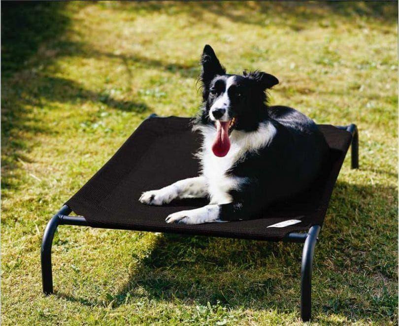 Cama Coolaroo elevada del animal doméstico con tejido de punto