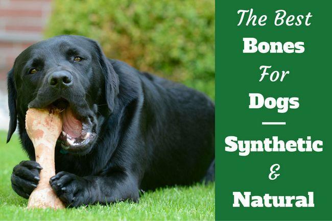 Mejor huesos de perro opinión: un vistazo a las opciones naturales y sintéticas