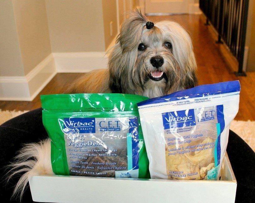 Mejores huesos de perro: lo que se trata son los mejores para su perro?