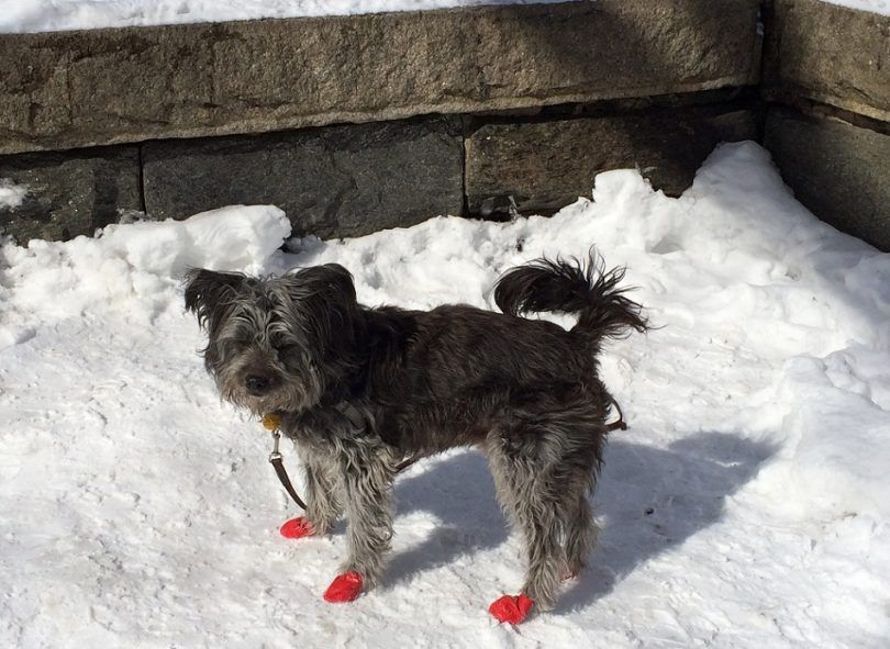 Los mejores botines del perro de la nieve: mantener su mejor amigo cálido y confortable